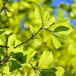 【ストーリー】緑の葉と黄色の葉