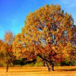 秋は行事がたくさん♪秋のおすすめ絵本特集
