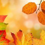 秋の優しい歌|Leaf Little Leaf|英語歌詞と動画