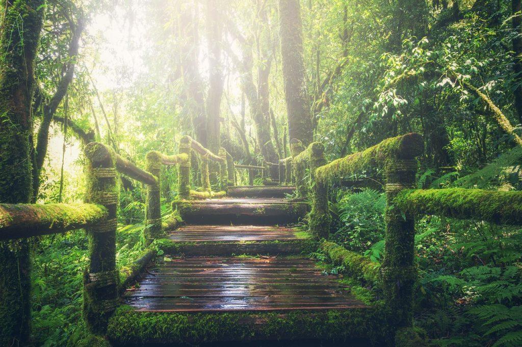 walking in the jungle 子どもの英語の歌 ジャングルでウォーキング
