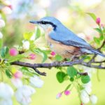 春に聞かせたい英語の歌|キッズソング歌詞と動画6選