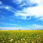 春の野菜|種類とレシピ|春キャベツ|アスパラガス|菜の花