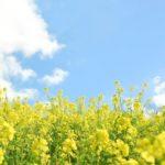 3月に聞かせたい子どもの歌|童謡|どこかで春が|春がきた|春の小川|花