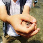 魚つかみ取り|東京おすすめスポット|釣り場