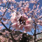 3月のオタマジャクシの様子|春の池を覗いてみました