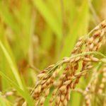 ダイエットで玄米食にするならどんなことに気をつければ良い?
