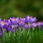 5月に子どもと歌いたい春の歌特集|童謡|こいのぼり|おかあさん|ことりのうた|ピクニック|きんたろう
