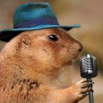 動物の英語の歌6選|animal song|鳴き声・動物園・サファリの歌も♪