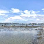 ふなばし三番瀬海浜公園|子どもと犬と遊びにいける公園|船橋市|梅雨の晴れ間にヤドカリ探し