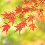 秋の関東|子どもとお出かけスポット|関東近郊ドライブ♬家族で秋を満喫しよう!観光名所21選